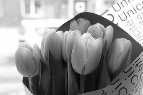 flowers 22-02-2019 (3)