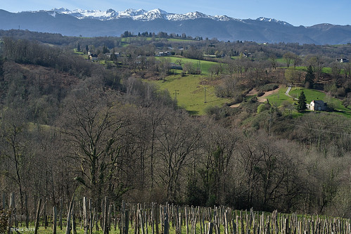 View to the Pyrenees nr Gan (64290)