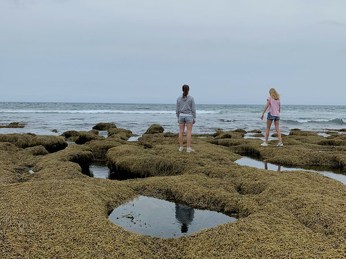 Exploring the rockpools