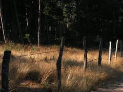 20080907 31679 1008 Jakobus Wald Wiese Zaun - Photo of La Chaze-de-Peyre