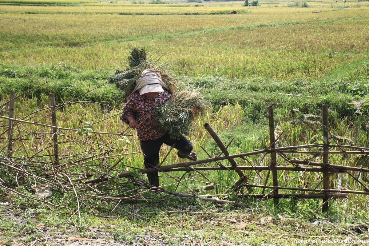 Vietnam_080
