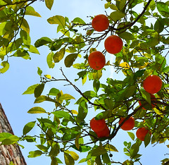 Andalucia Oranges