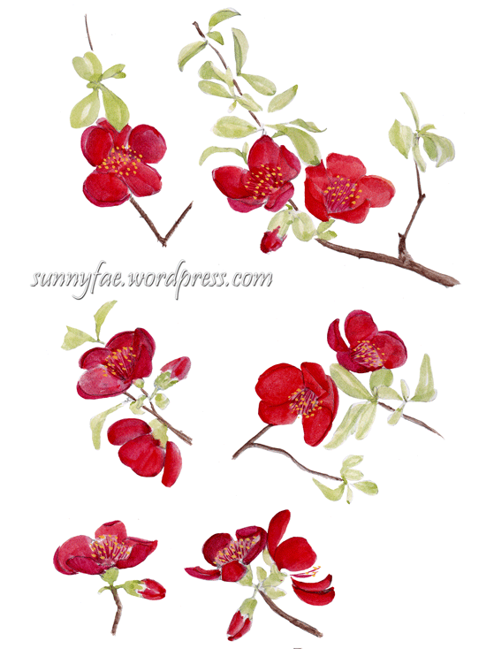 red quince sketch from at the zoo