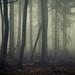 In the Woods of the Eifel by Netsrak