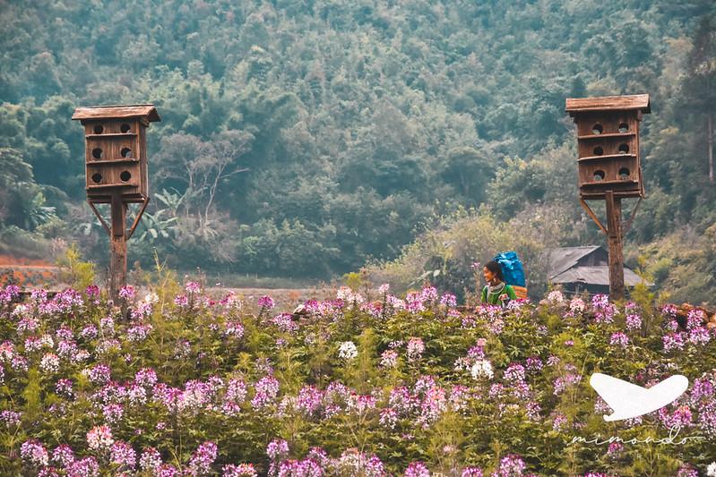 Qué ver en Vietnam en 15 días
