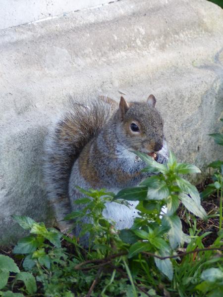 écureuil brompton 3