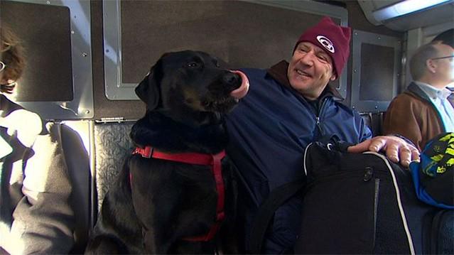 Perro-viajando-en-autobus