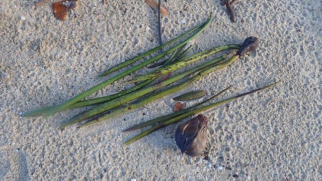 Various mangrove seedlings washed ashore