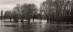 Winter Floods.  Day 259/365
