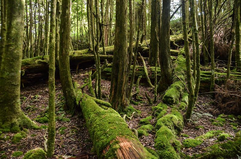 登北三錐山潮濕雜木林區 (6)