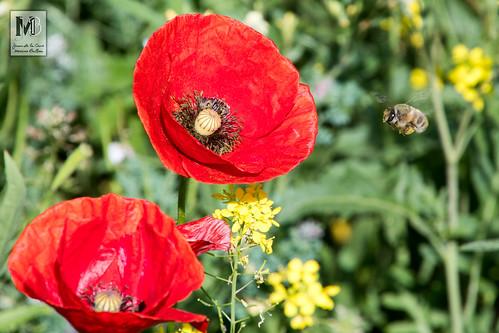 En busca del polen