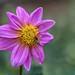 Bees n flower