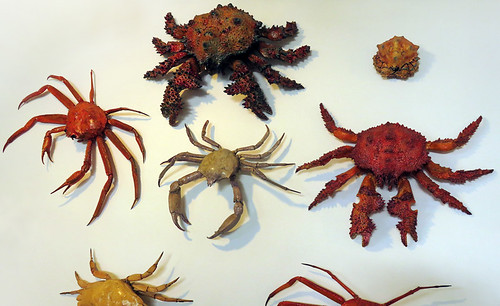 A collection of crabs at the Sooke Harbour House in Sooke on Vancouver Island, Canada