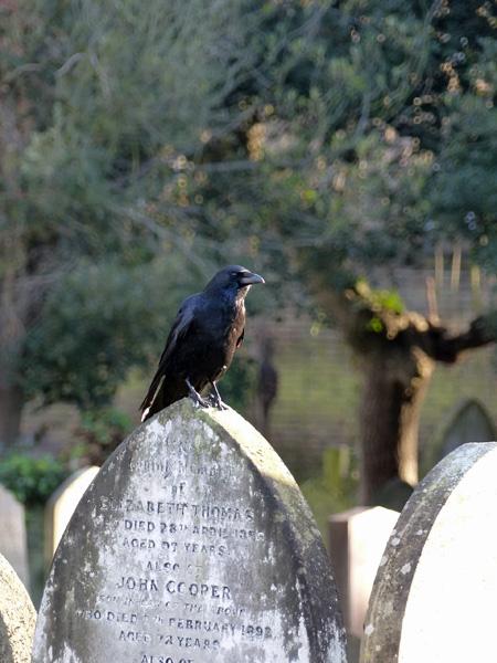 corbeau brompton