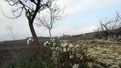 Páganos-Laguardia
