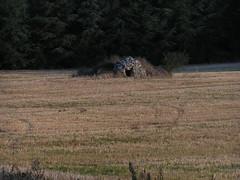 20080917 38471 1018 Jakobus Feld Steinhaus - Photo of Sainte-Alauzie