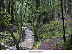 Cave Gulch Creek