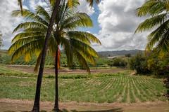 2019 Martinique Day 05 (196)