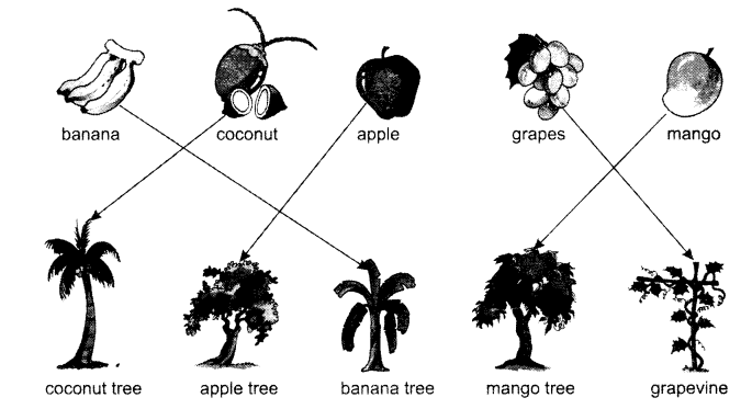 NCERT Solutions for Class 1 English Chapter 8 Mittu and the Yellow Mango 3