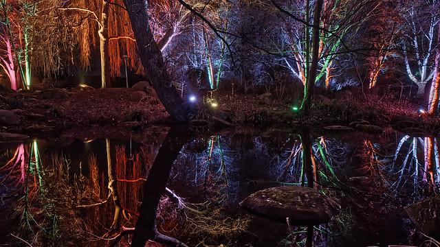 Dschungelcamp2 (Luisenpark-Winterlichter)