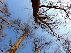 privind printre arbori/looking among trees