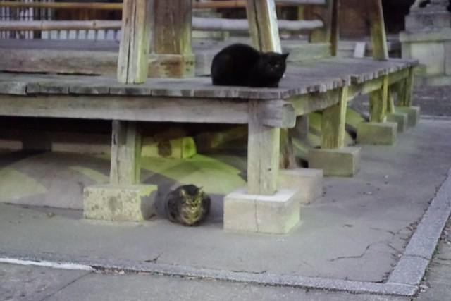 Today's Cat@2019-02-01