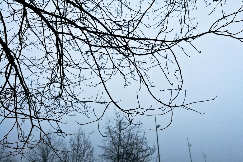 Les griffes de la brume