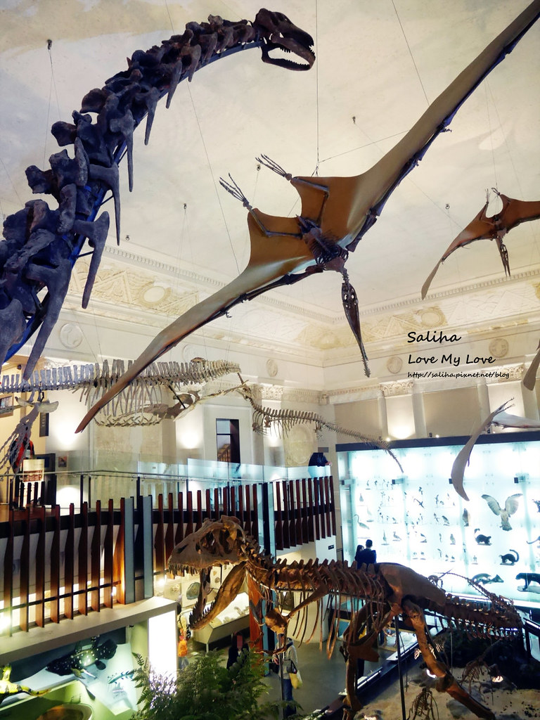 台北車站附近好玩親子景點恐龍博物館門票台博館土銀展示館 (5)