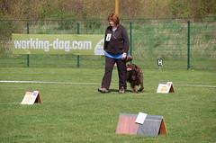 RO-Turnier (H)alle Hunde e.V. 06.04.2019