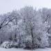 snow_20190113_113