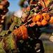 autumn by kinaaction