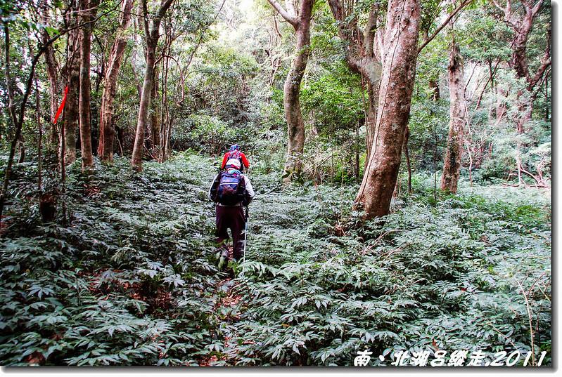 北湖呂與1349峰間五星級步道 4