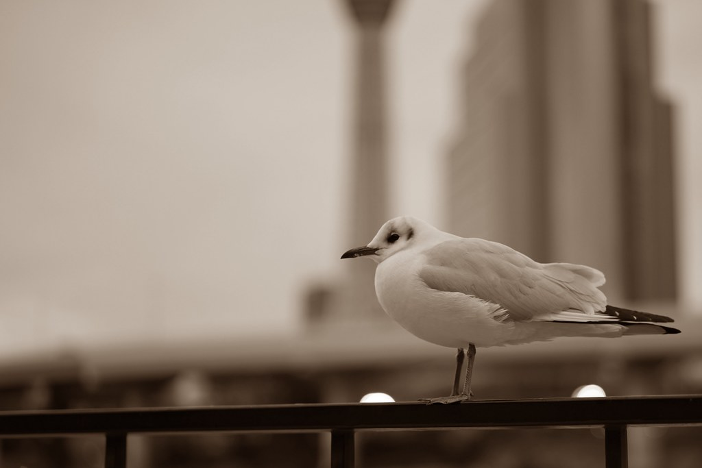 sea gull & Skytree_2