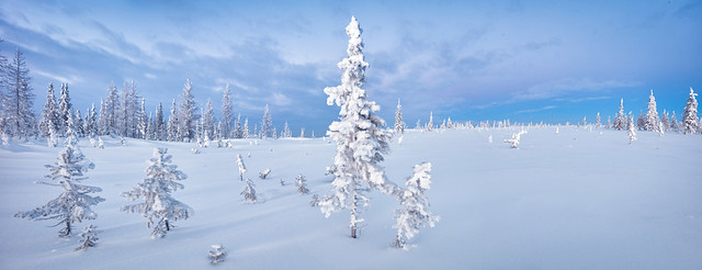 Winter north forest and tundra panorama