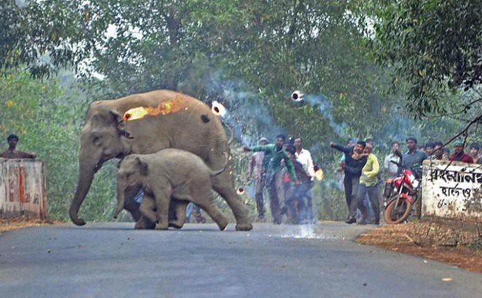 Aldeanos-lanzan-bombas-de-fuego-a-elefantes-en-la-India-696x431