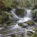 In the Forest . Russel Falls by :: Blende 22 ::