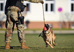 Military Working Dogs Train