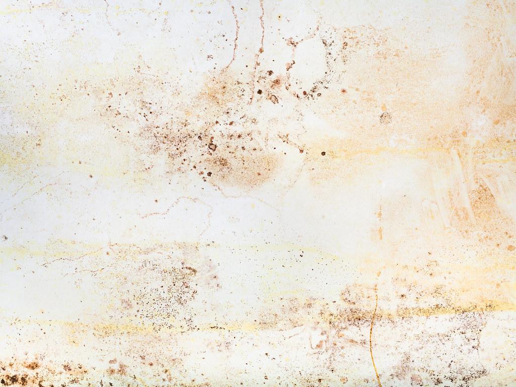 潮濕環境容易滋生黴菌,如牆壁、天花板或地毯都有機會見到它。圖片來源:vvoennyy / envato