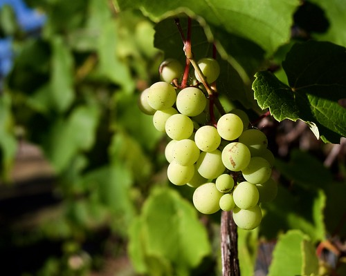 Grapes on 5