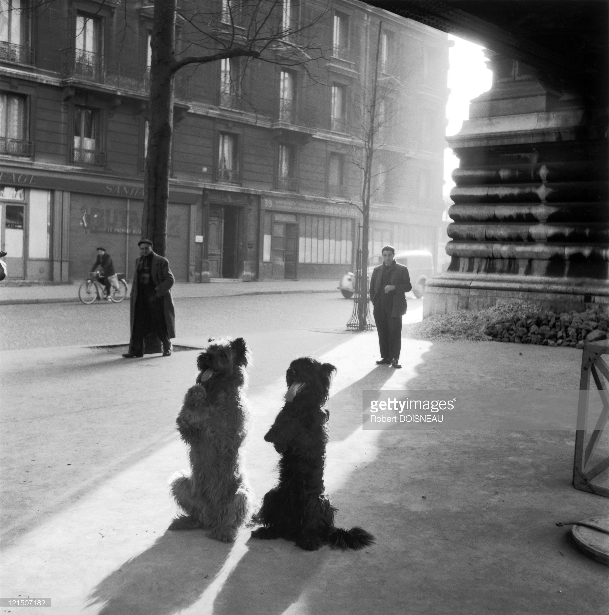 1953. Собаки Часовни