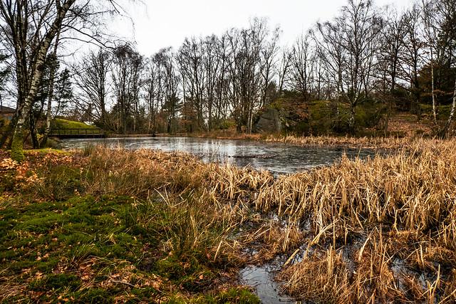 Reeds around the pond