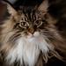 034 - cats cats cats- B9504234