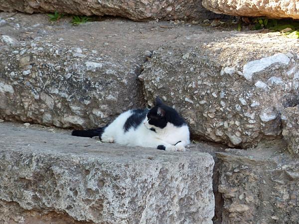 chat de ruines