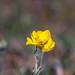 17-dos-de-marzo-de-dosmildiecinueve-El-Pardo-diecisiete-Web