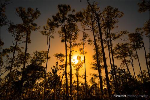 Everglades Sundown