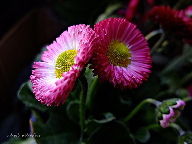 flores 008