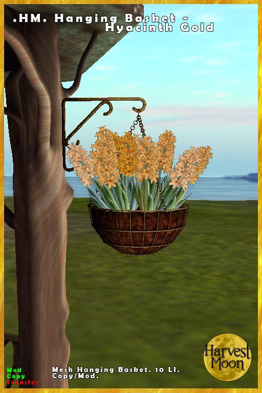 Harvest Moon – Hanging Basket – Hyacinth Gold