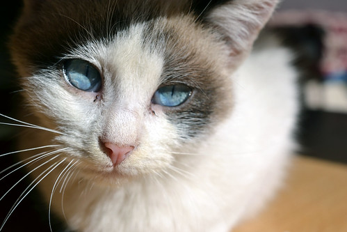 , Cat eyes