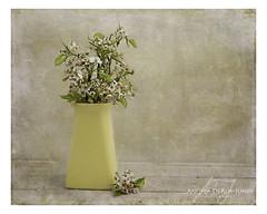 Tree Blossom in Yellow Vase