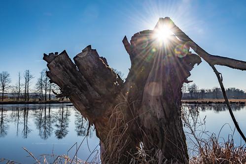 Winter sun 2588